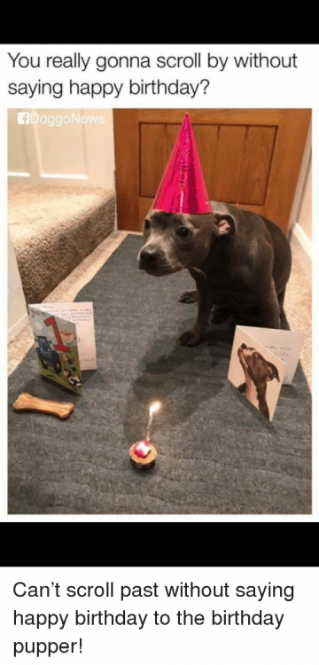 you-really-gonna-scroll-by-without-saying-happy-birthday-fdoggonew-37572714.png